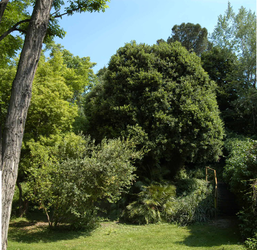 Campo d oglio in rete 1 fondazione istituto morcelliano - Piante mediterranee da giardino ...
